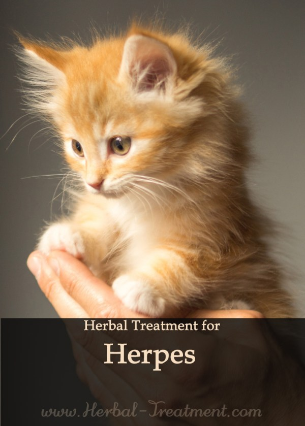 Herbal Treatment for Herpes Infection in Cats