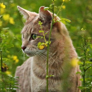 Herbal Treatments for Feline Hormonal and Glandular Conditions