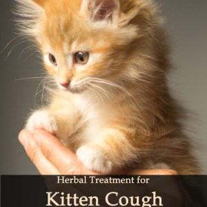 Herbal Treatment for Kitten Cough