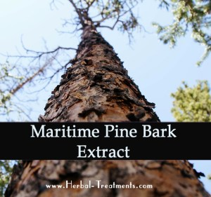 Herbal Treatment for Cancer- Pine Needles Extract for Cats