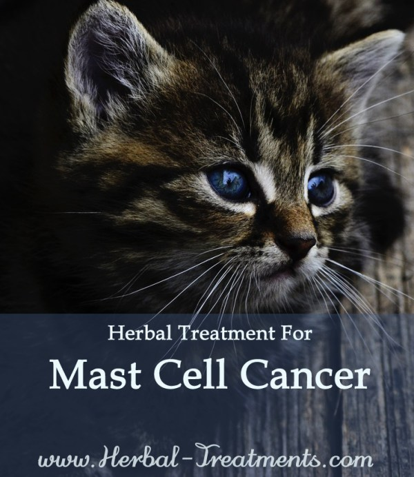 Herbal Treatment for Cancer - Mast Cell Cancer in Cats