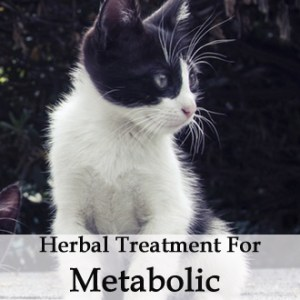Herbal Treatment for Liver and Metabolic Recovery in Cats