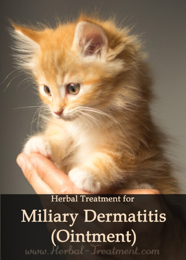Herbal Treatment for Miliary Dermatitis (Ointment) for Cats