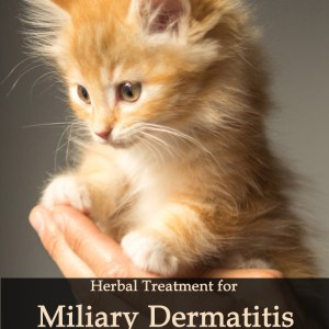Herbal Treatment for Miliary Dermatitis in Cats