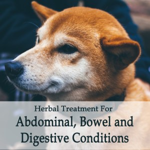 Herbal Treatments for Canine Abdominal, Digestive and Bowel Conditions