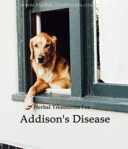 Herbal Treatment For Addison's Disease in Dogs