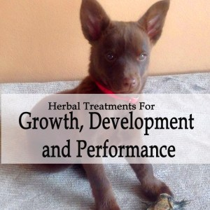 Herbal Treatments for Canine Athletic Performance, Growth and Development Support