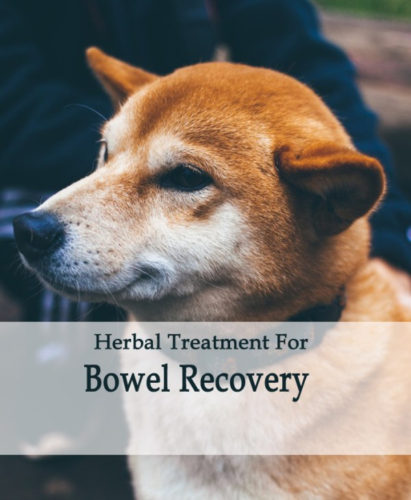 Bowel Recovery Herbal Tonic in Dogs