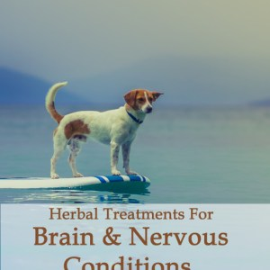Herbal Treatments for Canine Brain and Nervous Conditions