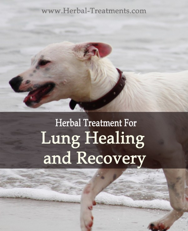 Breathe-Well Lung Healing and Recovery in Dogs