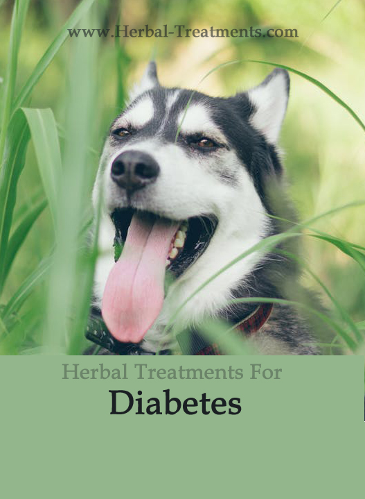 Herbal Treatment for Diabetes in Dogs