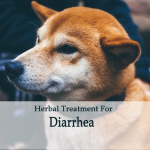Herbal Treatment for Diarrhea in Dogs