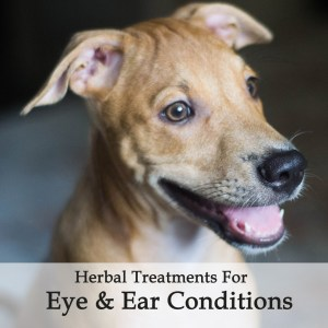 Herbal Treatments for Canine Eye and Ear Conditions