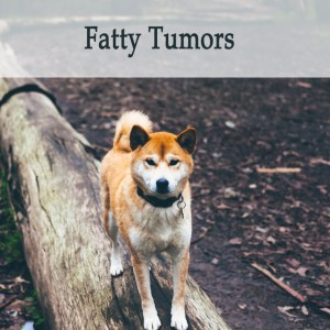 Herbal Treatment For Fatty Tumors in Dogs