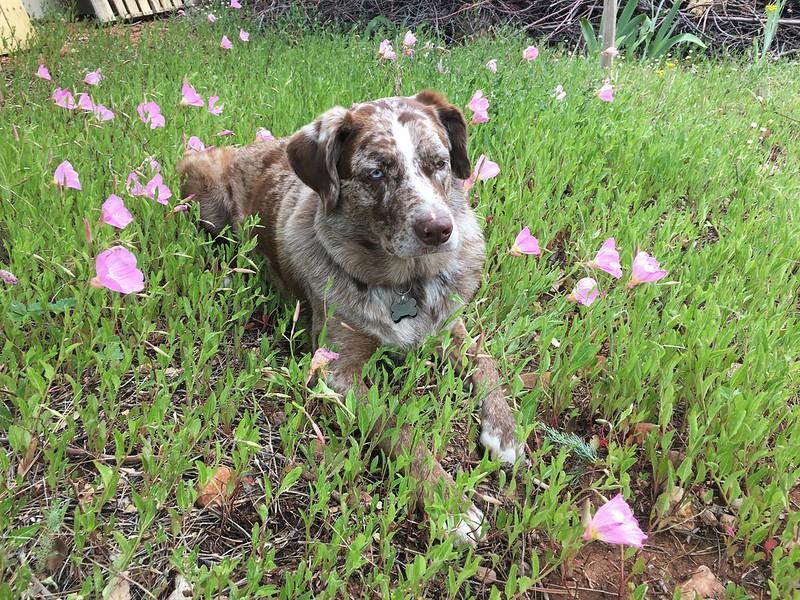 dog-grass-herbal-medicine