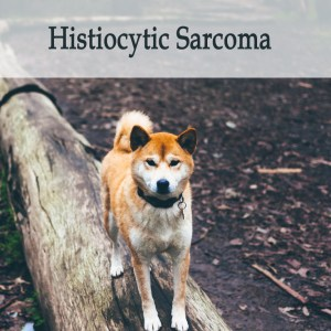 Herbal Treatment For Histiocytic Sarcoma in Dogs