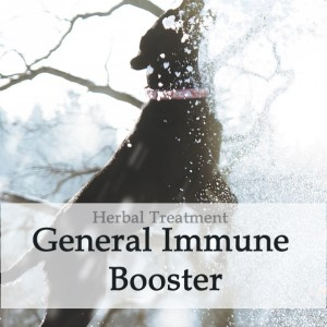 Herbal Treatment - General Immune Booster for Dogs