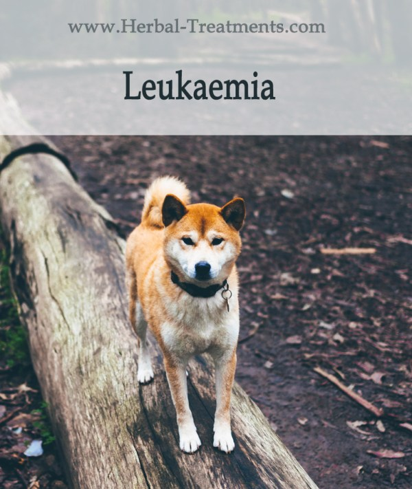 Herbal Treatment for Cancer - Leukaemia in Dogs