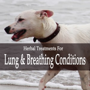 Herbal Treatments for Canine Lung and Breathing Conditions