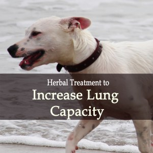 Increase Lung Capacity in Dogs