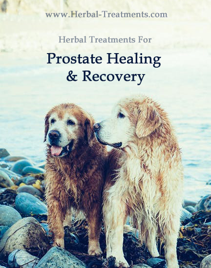 Herbal Treatment For Prostate Healing and Rehabilitation in Dogs
