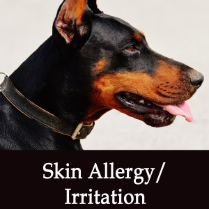 Skin Allergy/Irritation Herbal Tonic for Dogs