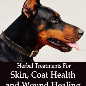Herbal Treatments for Canine Skin, Coat Health and Wound Healing
