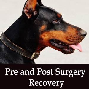 Pre and Post Surgery Recovery in Dogs