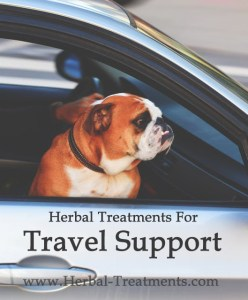Herbal Treatments for Canine Travel Support