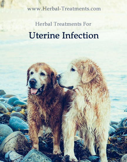 Herbal Treatment For Uterine Infection in Dogs