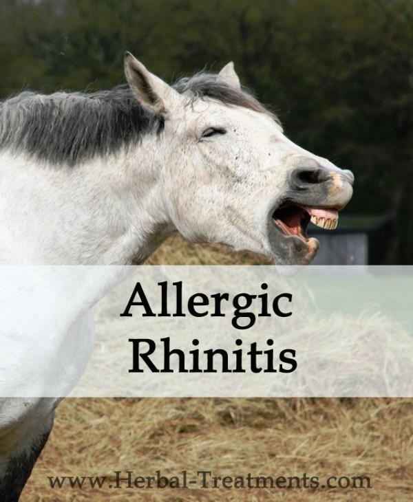 Herbal Treatment for Allergic Rhinitis in Horses