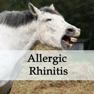 Herbal Treatment for Allergic Rhinitis in Horses