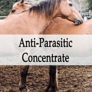 Herbal Treatment - Anti-Parasitic Herbal Concentrate for Horses