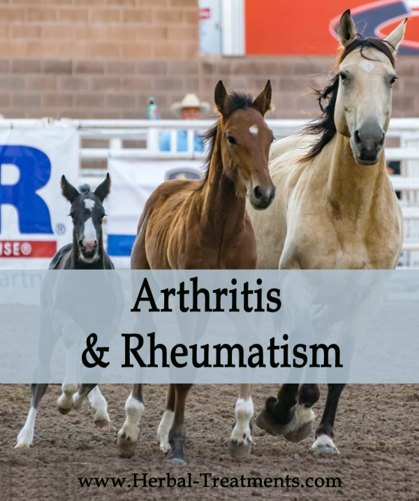 Herbal Treatment for Arthritis & Rheumatism in Horses