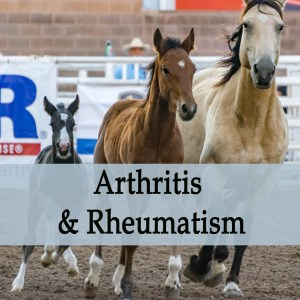 Herbal Treatment for Arthritis & Rheumatism in Horses