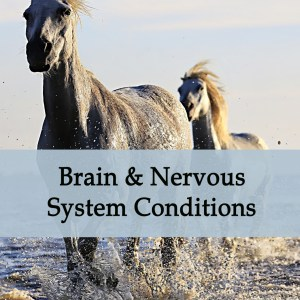 Herbal Treatments for Equine Brain and Nervous Conditions