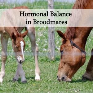 Broodmare Hormonal Balance