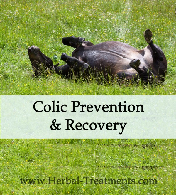 Colic Prevention & Recovery in Horses
