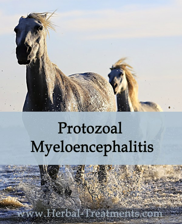 EPM - Equine Protozoal Myeloencephalitis - Neurologic Disease in Horses