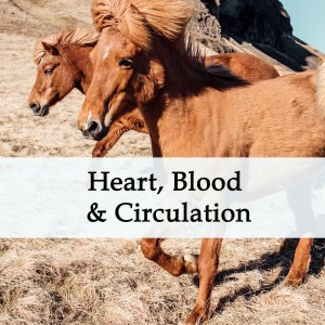 Herbal Treatments for Equine Heart, Blood and Circulatory Conditions