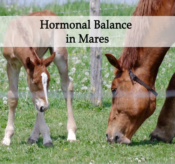 Herbal Treatment for Hormonal Balance in Mares