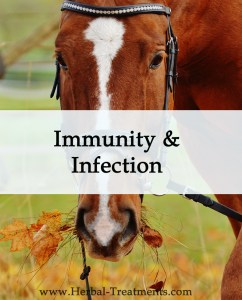 Herbal Treatments for Equine Immunity and Infection Treatment