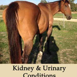 Herbal Treatments for Equine Kidney and Urinary Conditions