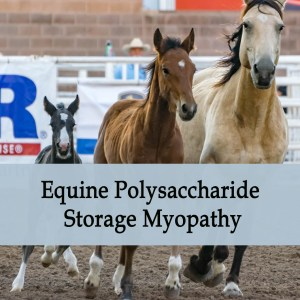 Herbal Treatment of PSSM, EPSM - Equine Polysaccharide Storage Myopathy in Horses