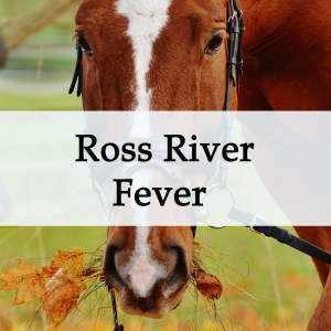 Herbal Treatment for Ross River Fever in Horses