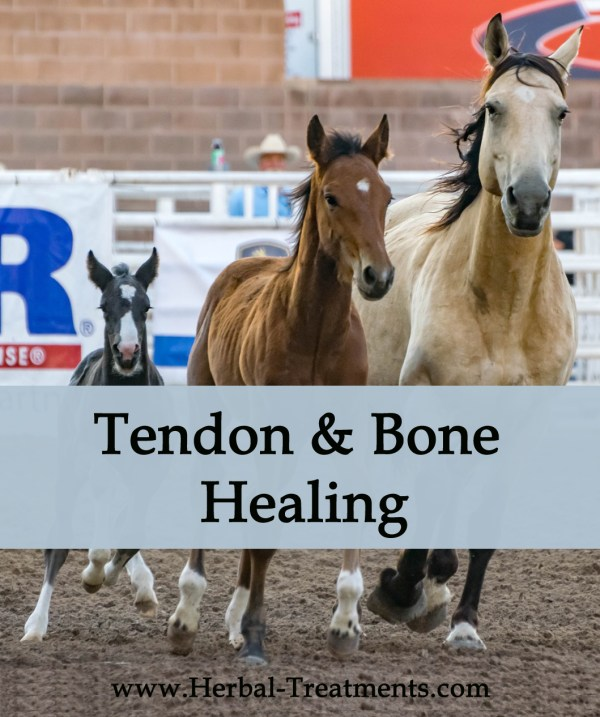 Herbal Treatment - Tendon and Bone Healing for Horses