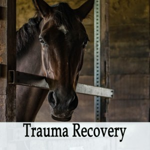 Herbal Treatment for Trauma Recovery - First Aid Tonic for Horses