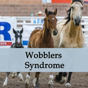 Herbal Treatment for Wobblers Syndrome in Horses
