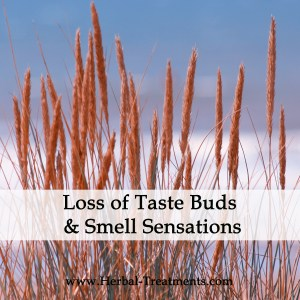 Herbal Medicine for Loss of Taste Buds and Smell Sensations