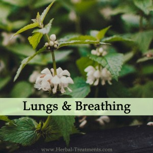 Herbal Treatments for Lung and Breathing Conditions